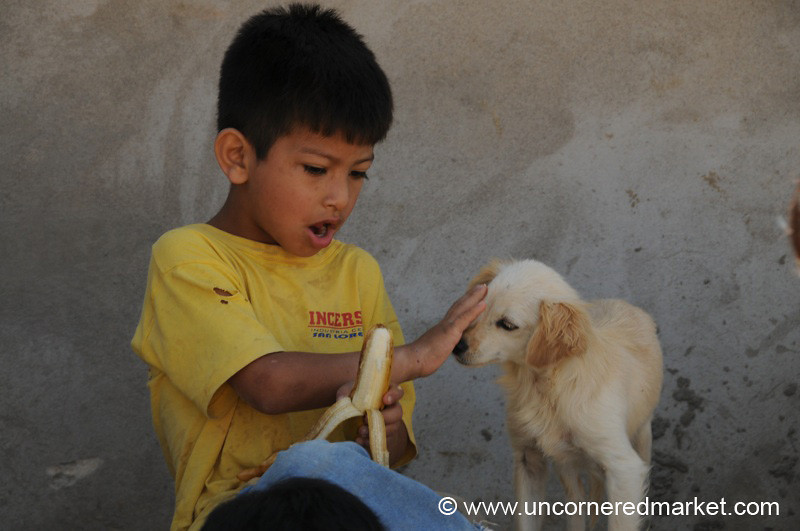 No Bananas for Dog - Tarija, Bolivia
