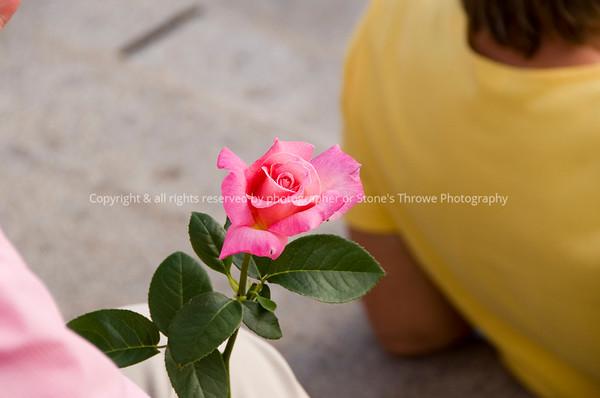 015-flower_rose-dsm-12jul09-3409