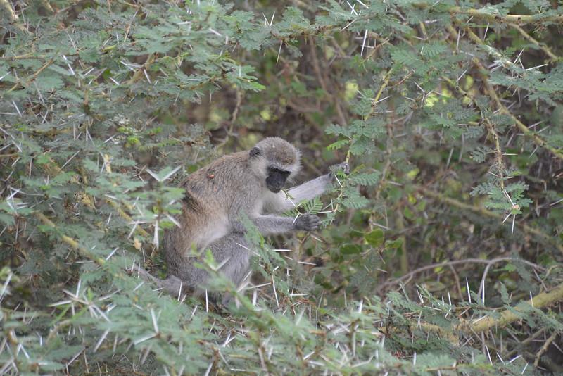 East Africa Safari 454.jpg