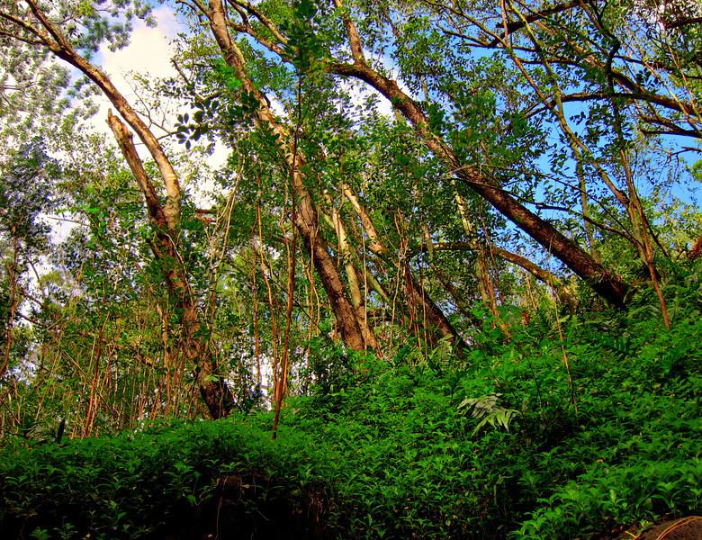 Kauai'10_S90_HDR5TC_25.jpg