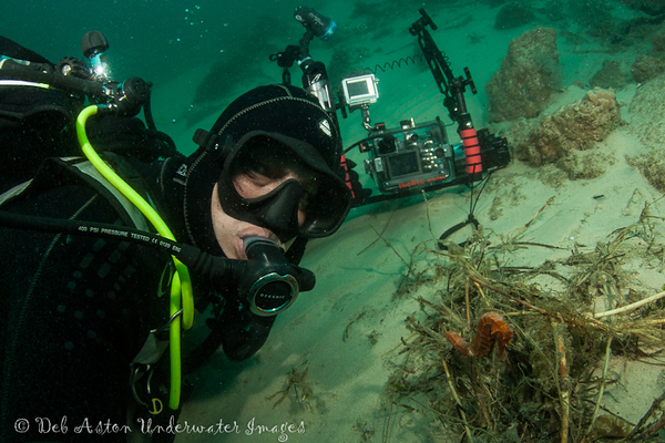 Mark Farrer with Sad Seahorse (Hippocampus tristis)