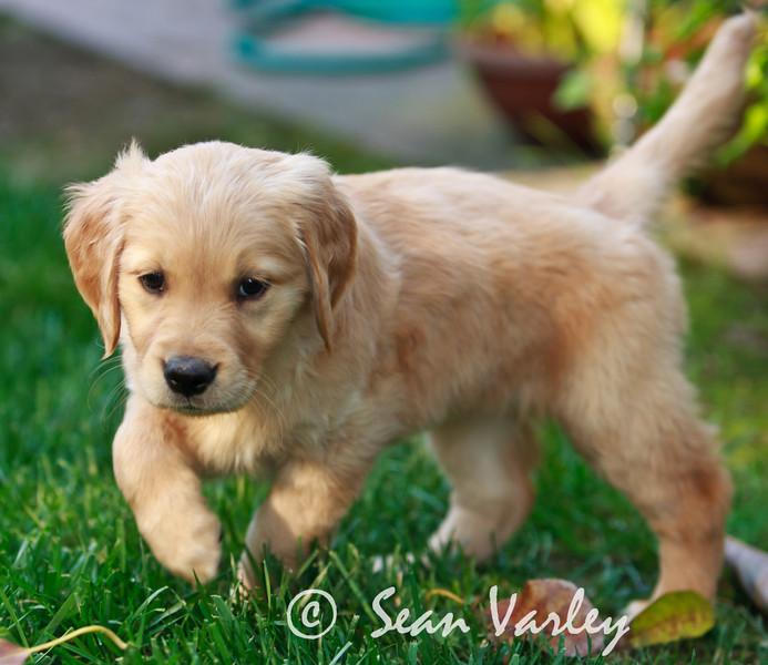 2011.04.16 Daisy 0134.jpg