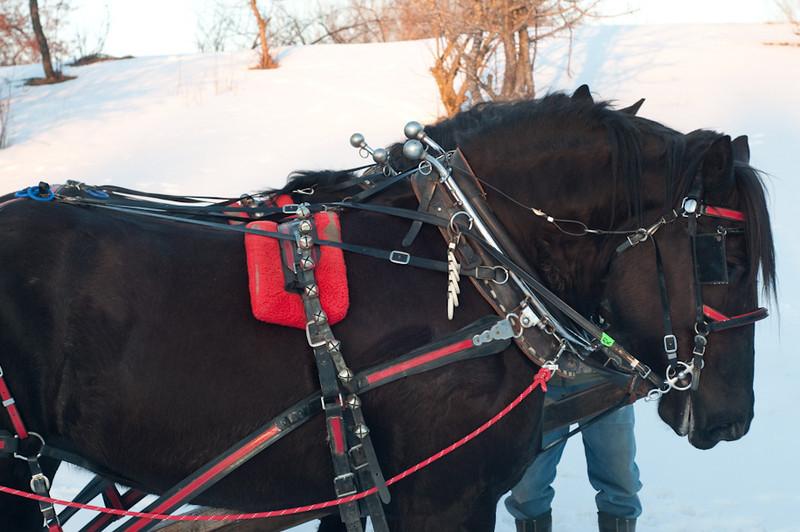 HorseRide-55.jpg