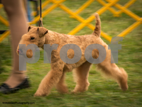 2016 Montgomery County Kennel Club - Terrier Show
