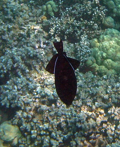 416- 20080416- Hawaii 20-Snorkelling IMG_0555.jpg