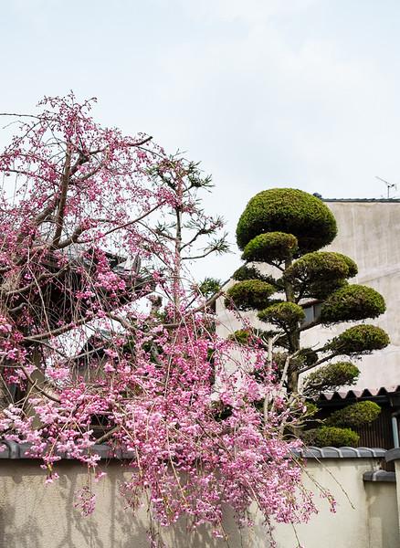 Nara to Kobe Day 6 (92 of 192).jpg