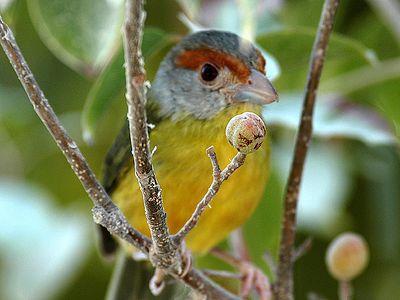 Birds of Sian Ka'an Biosphere