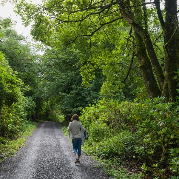 Woman walking on road amidst forest, Grange, County Sligo, Ireland