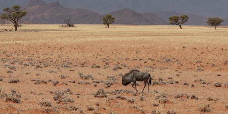 Namibia 69A4284.jpg