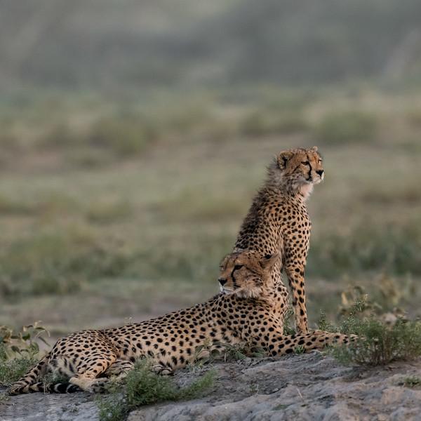 Tanzania_Feb_2018-96.jpg