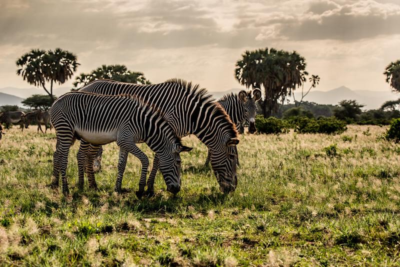 Samburu (10 of 70).jpg