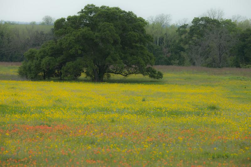 2015_4_3 Texas Wildflowers-7596.jpg
