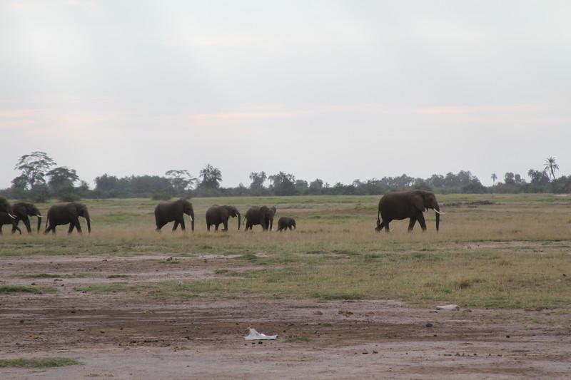 Kenya 2019 #2 288.JPG