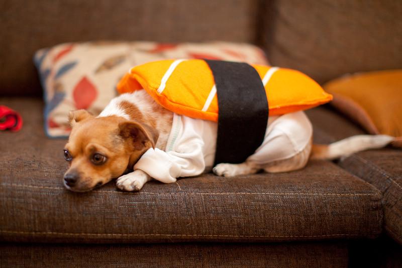 Dog-sushi-halloween-36.jpg