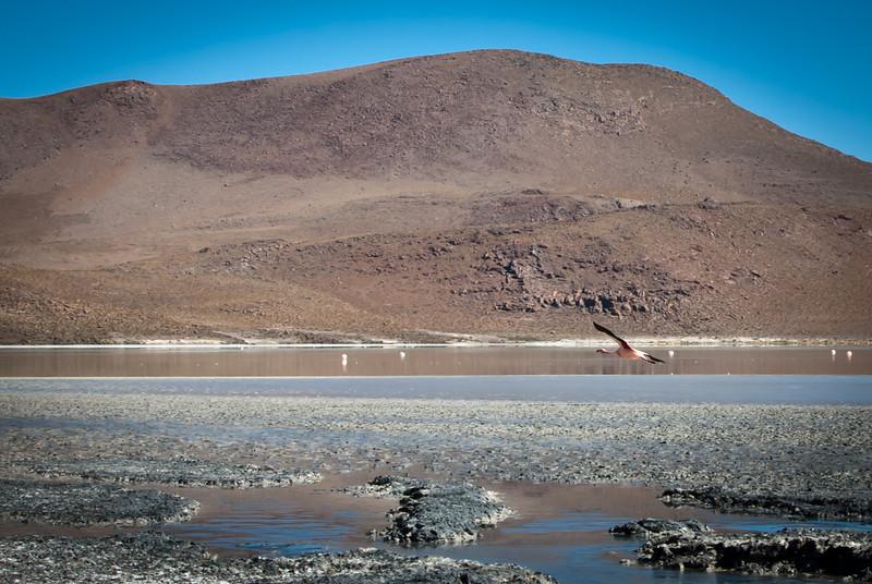 Tupiza to Uyuni 20120530 (63).jpg
