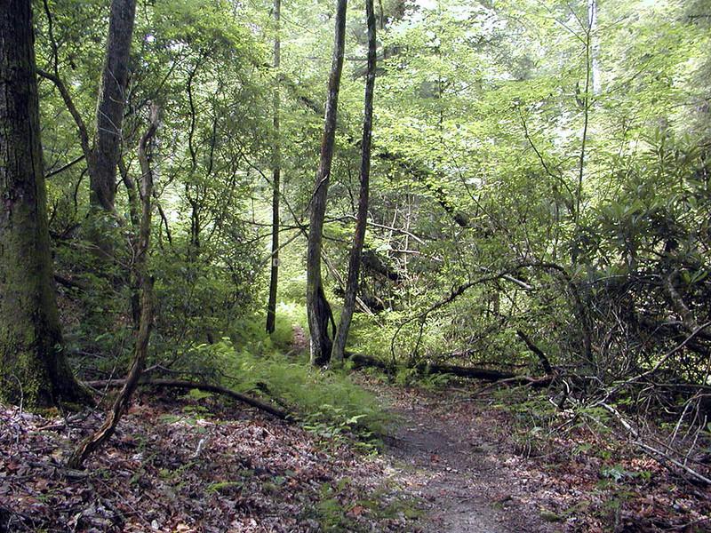 Honey Creek Loop at the start of a clockwise loop