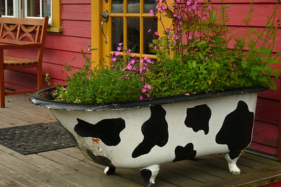 DAY 166 - June 15, 2011 - Cow Bay Flowerpot Cynthia Meyer, Prince Rupert, British Columbia, Canada