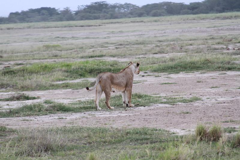Kenya 2019 #2 1429.JPG