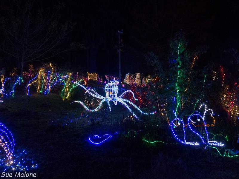 Lights in Brookings-21.jpg