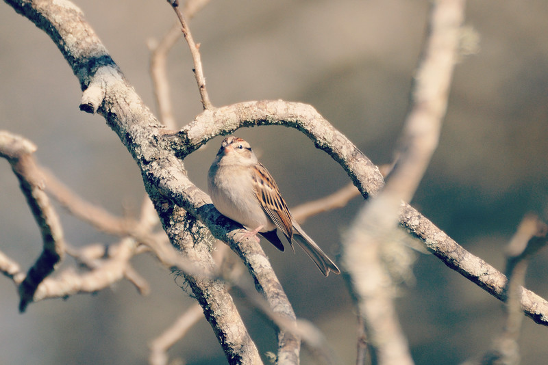 Of course, there are plenty of sparrows . . .
