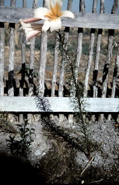 1962-1 (18).JPG