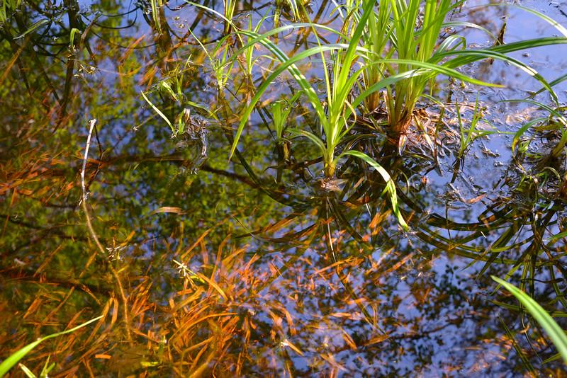 wetlands_03.JPG