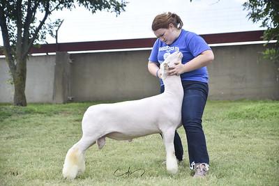 Knittle Livestock