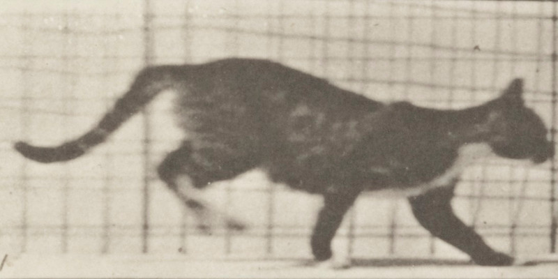 Cat trotting and galloping