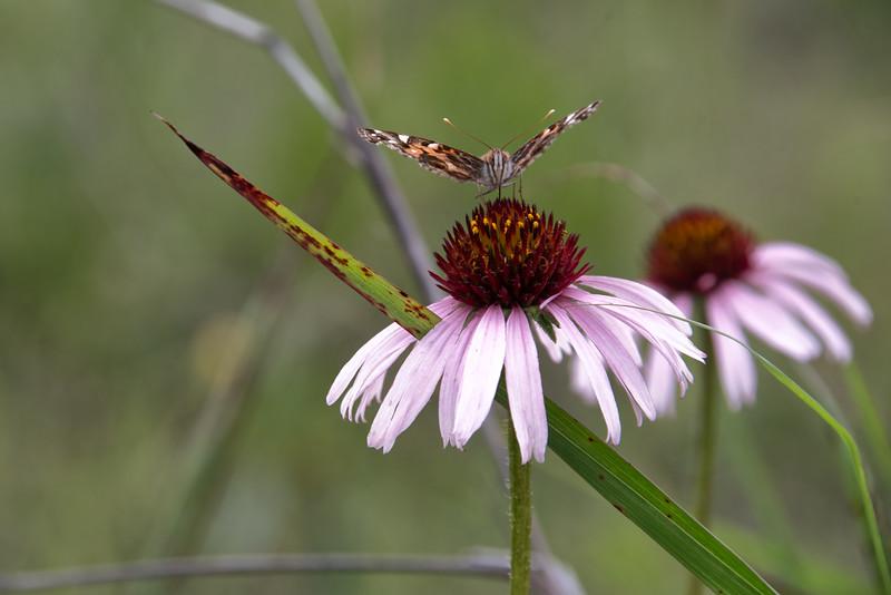 wild flower-4.jpg