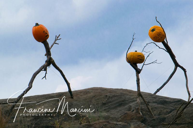 Halloween (1 of 1)-2.jpg