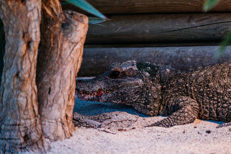 Tonis Zoo-0574.jpg