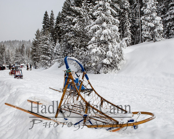 Cascade Dog Sled Club Diamond Lake, Or 2/23-24/13