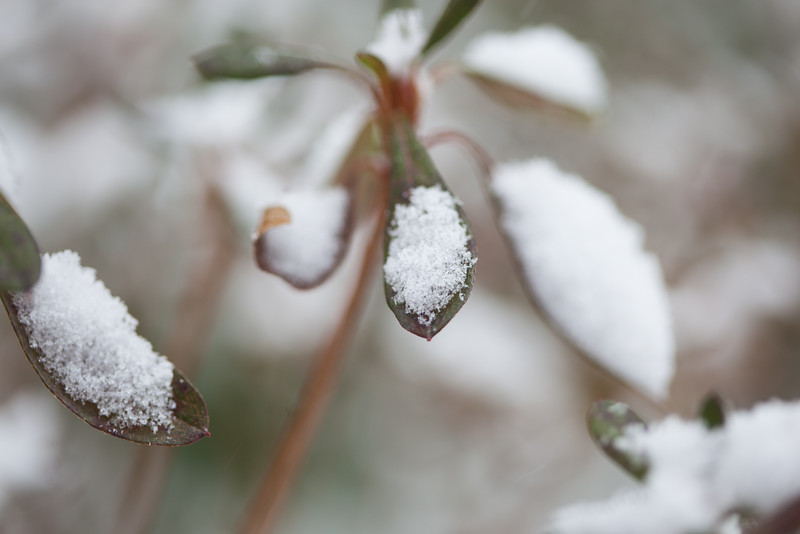 20160215 008 Snow - export.JPG