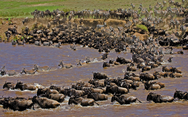 Wildebeest & Zebra Migration (horizontal)