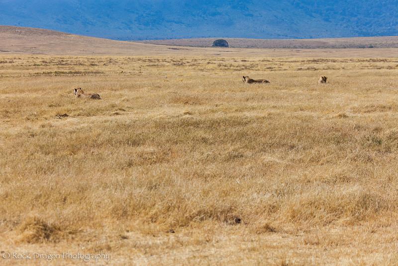Ngorongoro-16.jpg