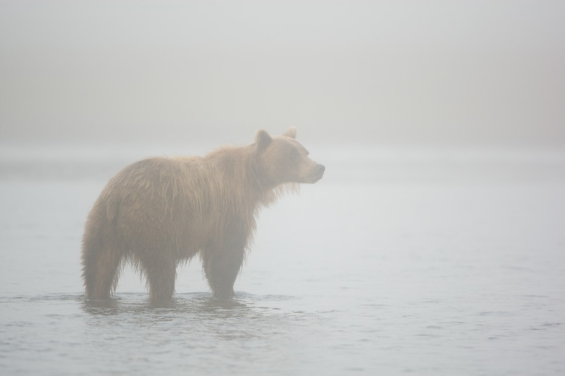 Bear in Fog 20x30.jpg
