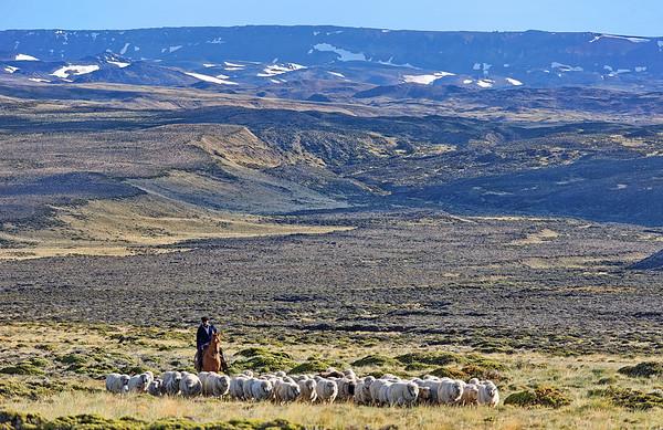 Les moutons 100% laine vierge