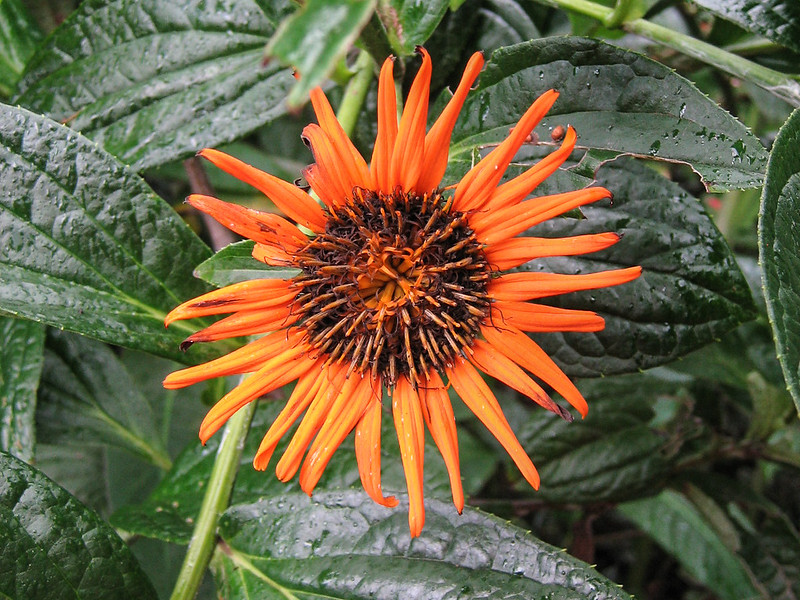 080101, CR - Flower (27).jpg