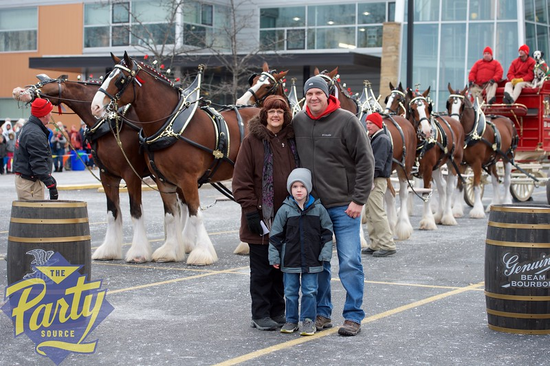 Clydesdale Portraits 2.jpg