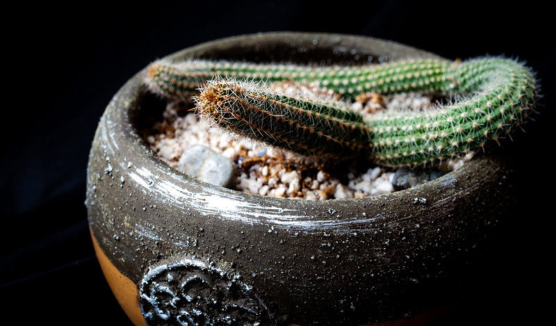GROUND cactus-7661.jpg