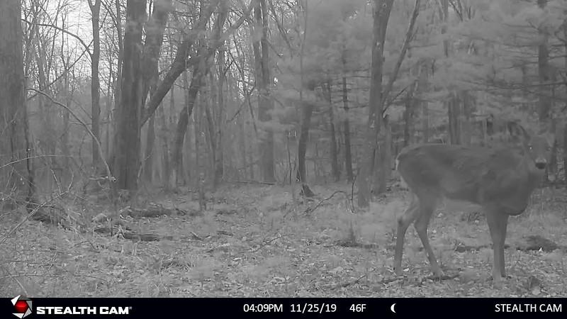 11-15-19 through 11-25-29...many deer on Dirt Bag Deer bait...also Super-tall rack and big 10-point bucks