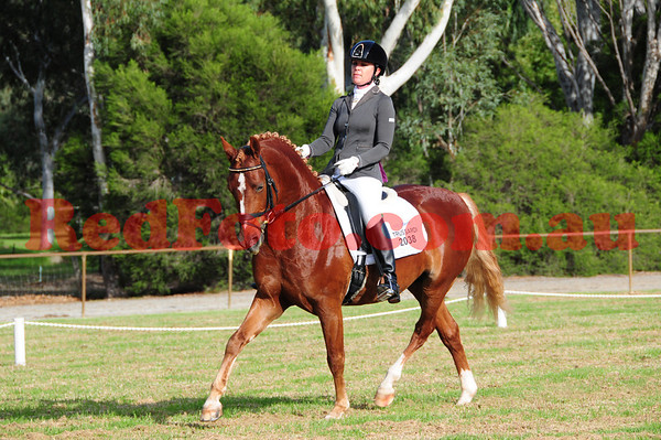 Transitions Dressage