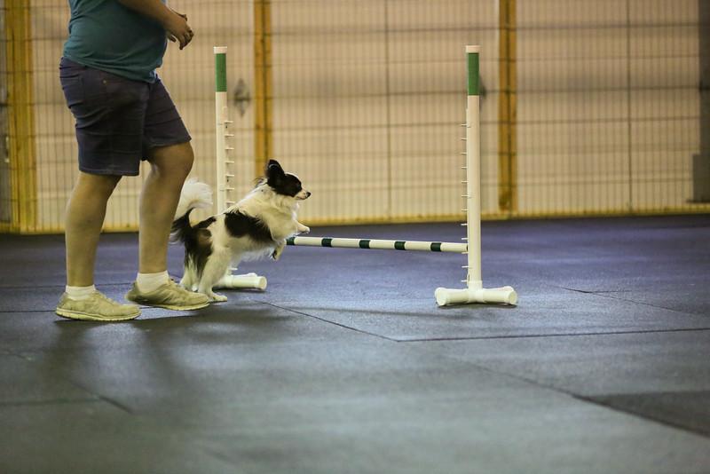 dogs_06142016-50.jpg