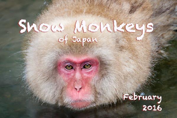Snow Monkeys of Japan
