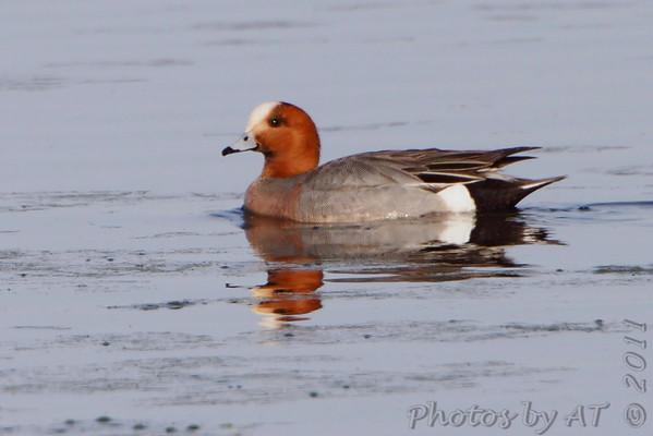 Birding 2011 May