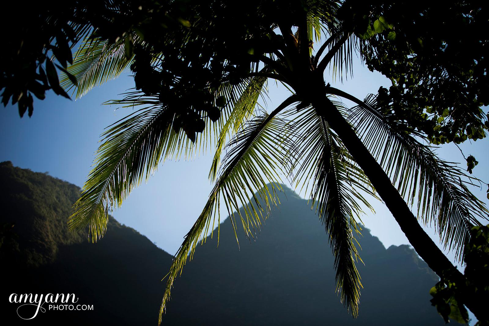hawaii_amyannphoto_81