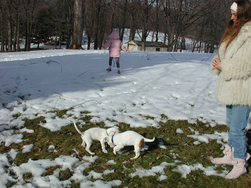 Feb 05- Puppies 010.jpg