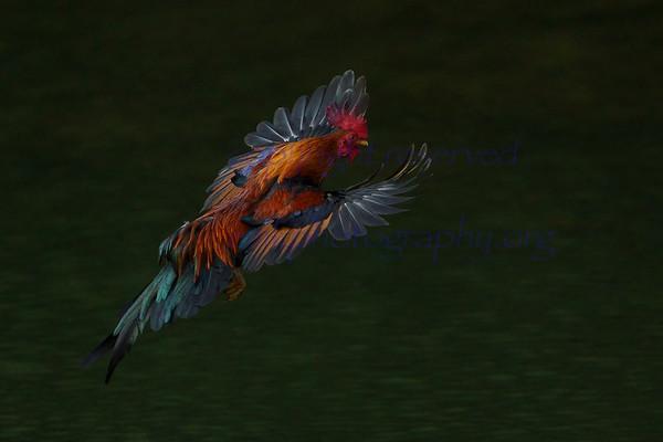 BIRDS series 2 edited with Luminar