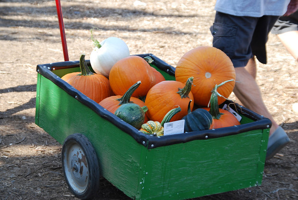 Pumpkin Patch - 2011