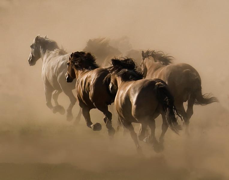 Horse Spirits